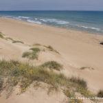 Playa nudista de la Devesa del Saler Valencia
